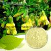 Sophora Japonica Genistein 98%