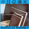 Eucalyptus Core/Birch Core/Hardwood Core Film Faced Plywood