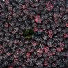 IQF Frozen Blackberry of Variety Hull