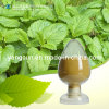 Natural Plant Extract Rosmarinic Acid 98% CAS: 20283-92-5