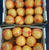 Fresh High Quality Honey Pomelo
