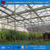 Multi-Span Hydroponic Tunnel Film Greenhouse with Hydroponic System