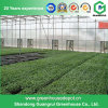 Multi-Span Steel Structure PC Sheet Greenhouse for Fruit