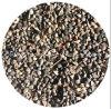 High Quality Export Shanxi Buckwheat