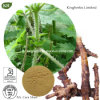 Nettle Root Extract Beta--Sitosterol