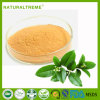 Cheap Price Top Quality Green Tea Extract Powder