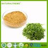 GMP Factory 100 Mesh Green Tea Extract 50% Poiyphenols