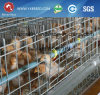Galvanized Pullet Chicken Cage