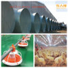 Customized Automatic Equipment in Poultry House with Installation