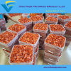 "3000PCS Bucket 1 1/2"" * 12ga USA Plastic Cap Nails"