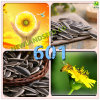 Heath Foods Refined Quality Chinese Sunflower Seed New Type 601