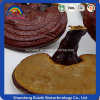 Factory Wholesale Ganoderma Lucidum Hot Sell
