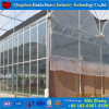 Galvanized Steel Frame Garden Greenhouse for Sale and Growing Vegetables