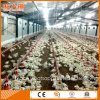 Automatic Broiler Poultry Feeding System with Free Design and Steel Construction
