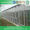Agricultural Multi Span PC Sheet Greenhouse with Factory Price