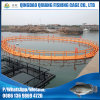 Floating Tilapia Farming Cage Without Buoy