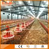 Modern Automatic Poultry Farm with Design and Matching Prefab Shed