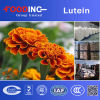 China Buy Low Price Organic Inulin Powder Fiber Supplier