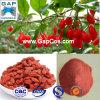 100% Nature Wolfberry Fruit Juice Powder