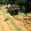 Mini Four Wheel Small Tractor for Palm Oil Plantation