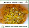 Natural High Quality Dandelion Powder Extract with Flavones 5% UV