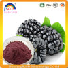 Health Food Mulberry Juice Extract Powder