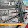 A type Automatic Pullet raising equipment/Baby Chicken Cage