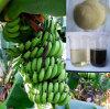 Organic Agriculture Fertilizer Calcium and Boron Special Fertilizer for Banana Foliar Fertilizer
