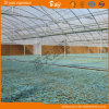 Dutch Technology Multi-Span Plastic Film Greenhouse for Seeding