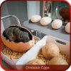 Simulation Dinosaur Baby Fiberglass Dinosaur Egg