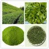 Chinese Astilbe Rhizome Extract/Rhizoma Astilbis Powder