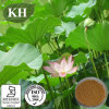 Lotus Leaf Extract: Nuciferine 2% by HPLC; 10: 1