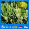 Natural Plant Extract with High Purity Baicalin 85% 90% (LY-0150)