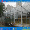 China Professional Glass Greenhouse for Pepper