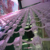 Best Seller & 3D Effect P55 LED Display for Wedding Decoration