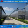 China Supplier Multi-Span Agricultural PC Sheet Greenhouse with Hydroponic System for Angriculture&Aquaponics&Cucumber