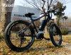 Paladin 48V 350W Fat Tire Strong Mountain Electric Bike Ebike