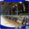 High Quality Galvanized Prefabricated Steel Frame for Cattle Farm House