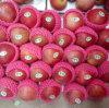 Global Gap Certificated Fresh Qinguan Apple