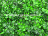 Decorative Artificial Wall Grass for Indoor and Outdoor Decoration (SUNW-MZ00035)