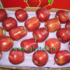Red Delicious Apple with High Standard