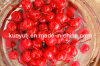 Canned Cherry in Light Syrup