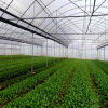 Good Agricultural Film Greenhouse for Vegetable Crops