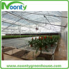 Professional Agricultural Greenhouses for Hydroponics Growing