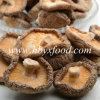 Fresh Shiitake Mushroom with Different Packing