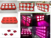 LED COB 600W Grow Light