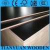 1220mm X 2440mm Poplar Core Plywood, Black Board for Construction
