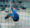 PVC Coated Welded Wire Mesh/Breeding Net