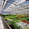 Commercial Multi-Span Glass Greenhouse for Flowers