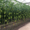 New Commercial Glass Greenhouse for Vegetable